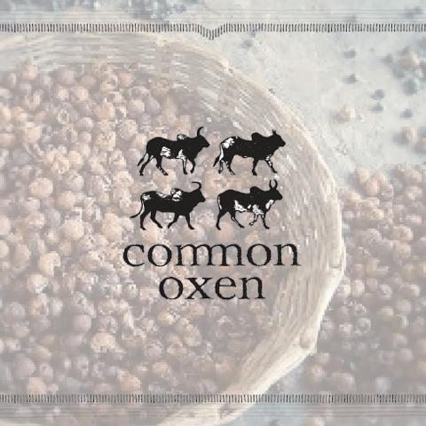 Common Oxen